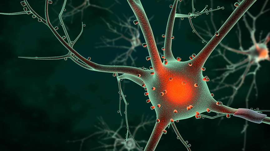 Motor Neurone Disease Cure Is On The Table, Thanks To A New Study
