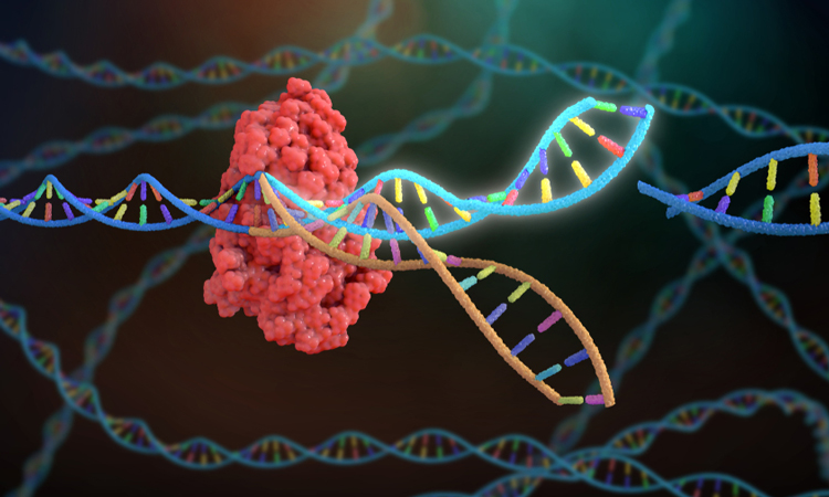 Cancer Patients Treated Safely Via CRISPR In A New Experiment