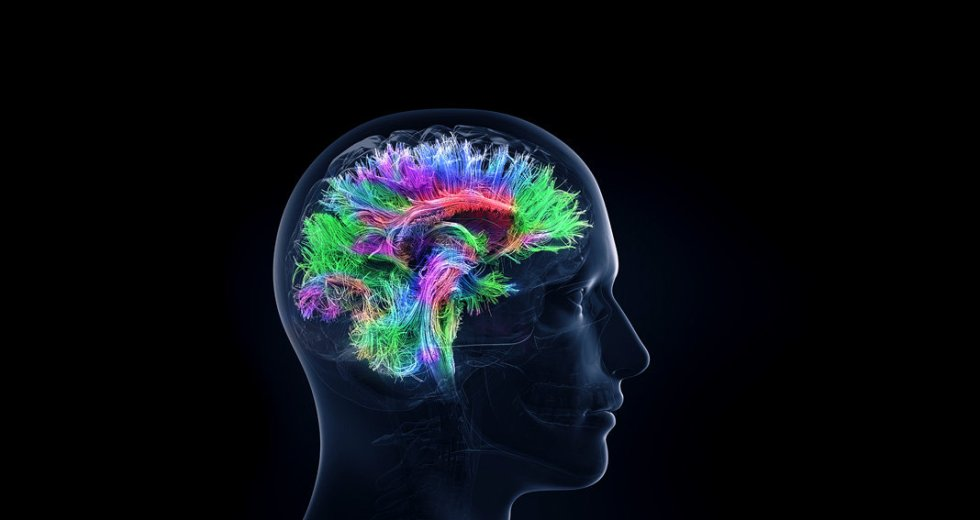 The Brain Changes Genes In Neurons To Create And Grow Memories