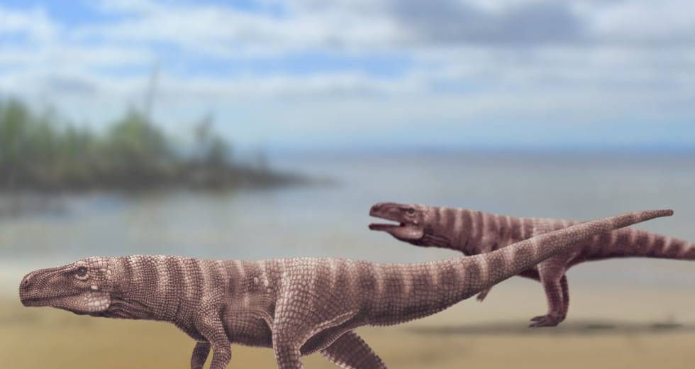 Bipedal Crocodile Ancestors Uncovered