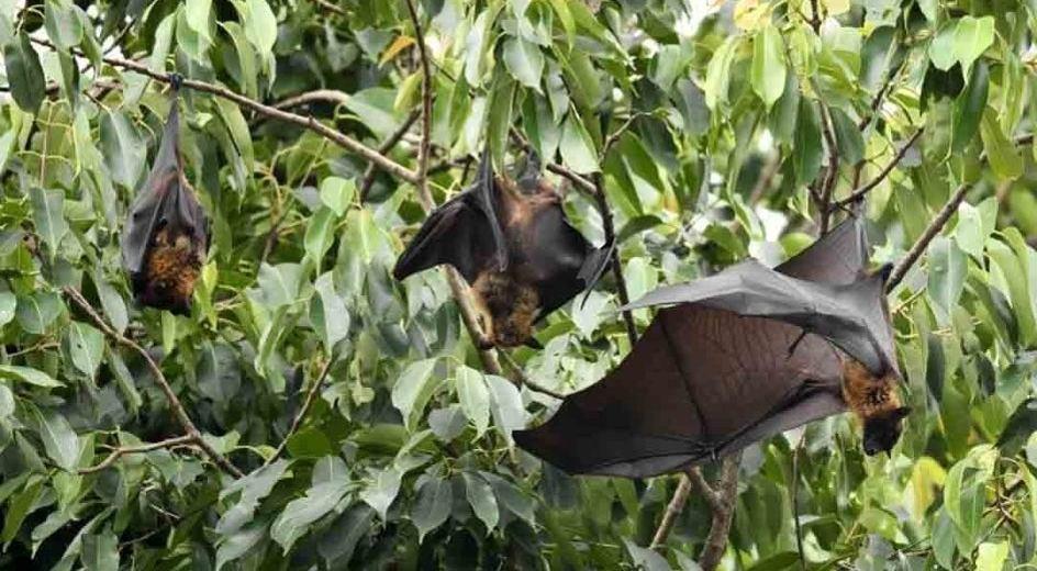 New Coronavirus Similar to COVID-19 is Found in Bats
