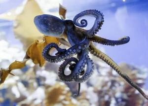 Octopus Research Provides Insight Regarding The Evolution Of Sleep