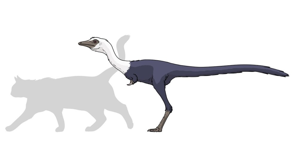 A Team Of Palaeontologists Found A Cat-Sized Stegosaur