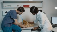 The Step-by-Step Guide to Opening a Veterinary Clinic