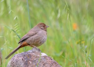 Technology provides Scientists Advanced Methods Of Following Birds