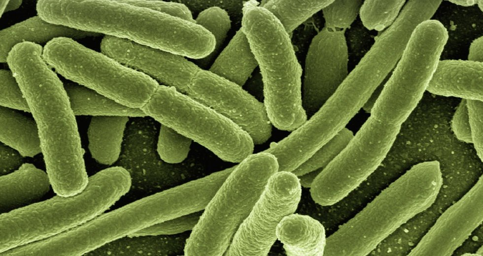 Bacteria Can Become Drug-Resistant Superbugs After Infection With Some Viruses
