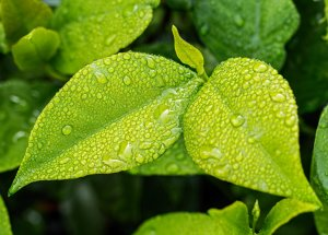 The Emergence of Plants Changed Carbon Cycle on Earth