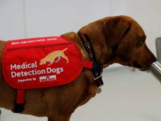 Coronavirus Detection Update: Dogs Can Sniff Out People Infected with COVID-19