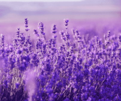 Top 10 medicinal plants with pictures and scientific names