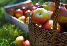 Photo of فوائد اكل التفاح في السحور