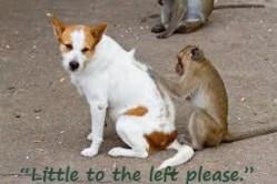 Dog needs Flea Free due to having pesky fleas.
