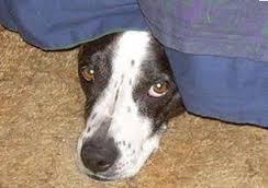 Fearful dog needs Pet Calm.