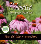 Echinacea For Colds & Flu