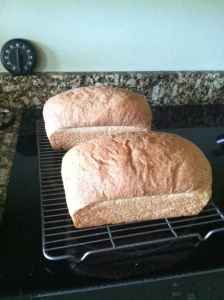 Freshly baked whole wheat bread loaves