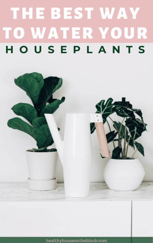the best way to water your house plants plus homemade fertilizer for indoor plants and other organic care ideas