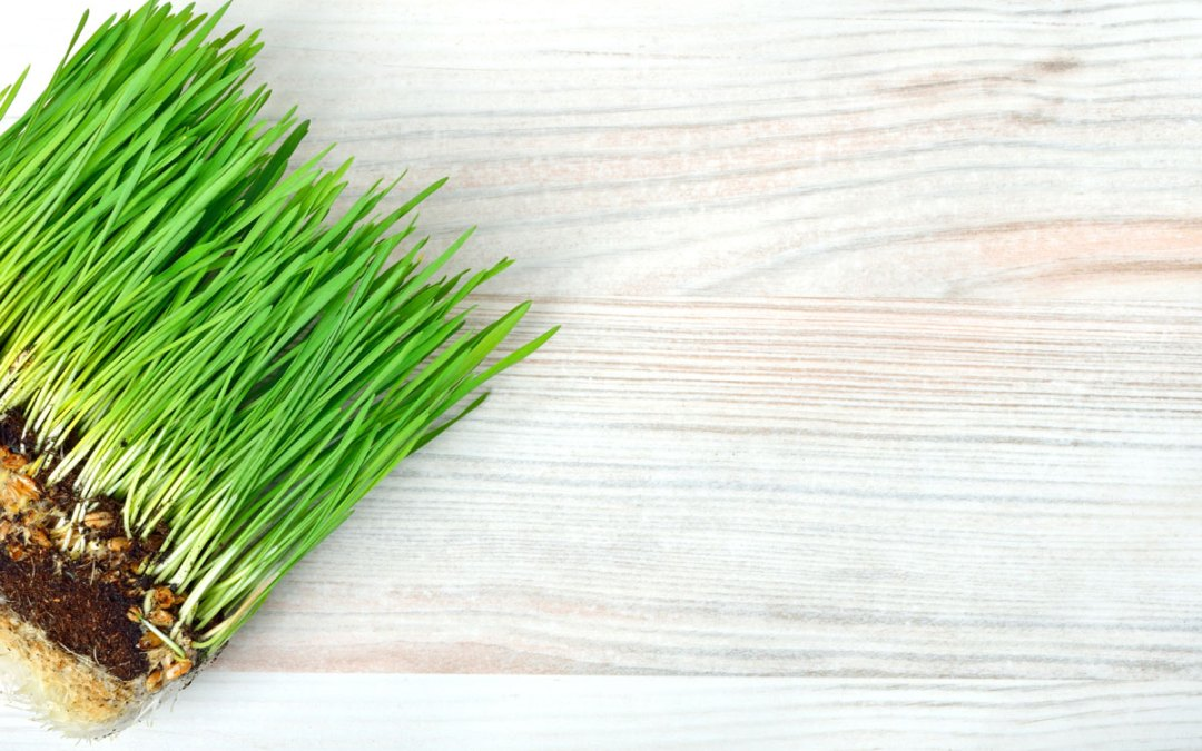 Wheatgrass Compared to Other Leafy Greens