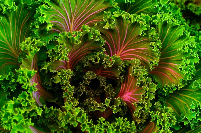 Green leafy vegetables like kale, turnip greens, & spinach 49-110μg per 100g