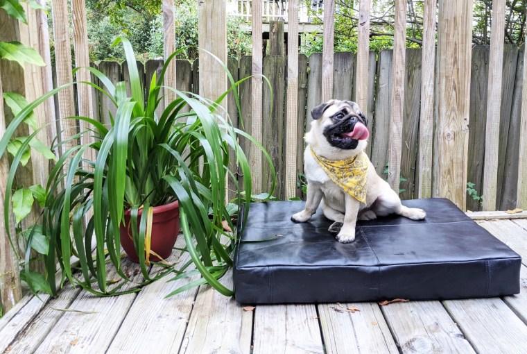 Albus, Le Dog, Healthy Living + Travel
