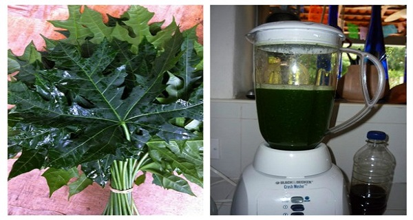 """This Plant Is Called """"God's Gift"""" Because It Can Cure More Then 100 Diseases!!!!! (RECIPE)"""