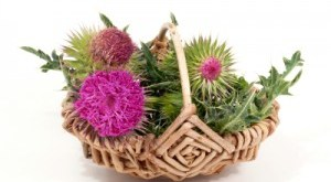 Milk Thistle in Basket