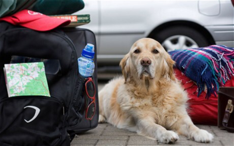 You should create a disaster checklist for your pet during pet disaster preparedness