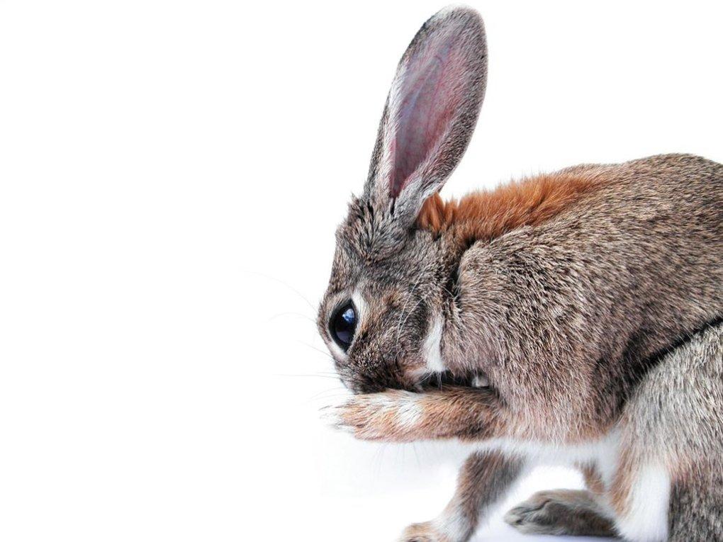 Dierproefvrije merken | Favoriete merken en producten | Animal friendly