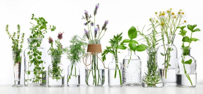 Kruiden | De gezonde en geneeskrachtige werking van kruiden