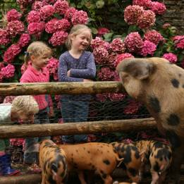 Animal Feeding Farm Holiday Cottage Accommodation