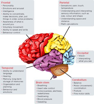 Stroke and the brain | Heart and Stroke Foundation