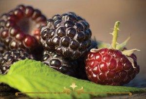 Black Raspberry Vanilla Scented Candles