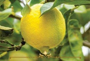 Lemon Drop Scented Candles