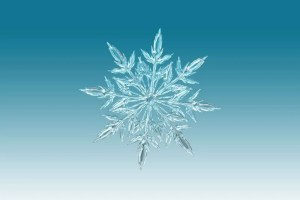 Up close picture of a snowflake on a blue background.