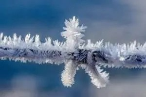 Ice crystals on barbed wire.