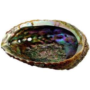 Abalone half shell.