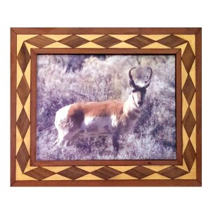 Antelope portrait in handcrafted hardwood frame.