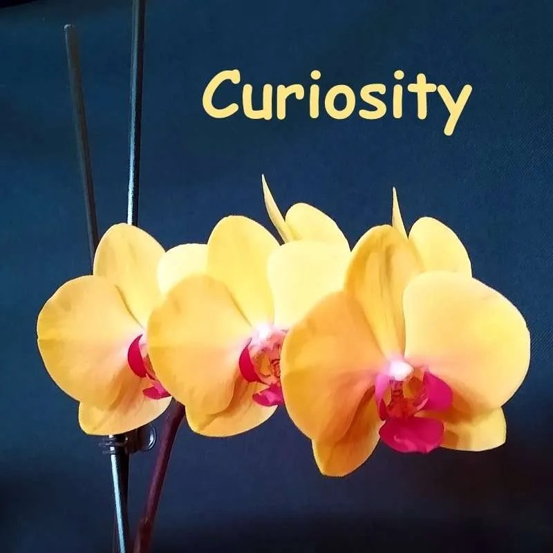 Curiosity Album Cover