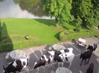 England cows restaurant hotel beer garden