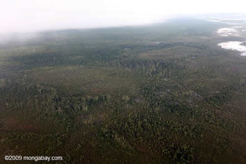 Degraded Forest Peatlands 2009 Kalimantan Rhett Butler Mongabay