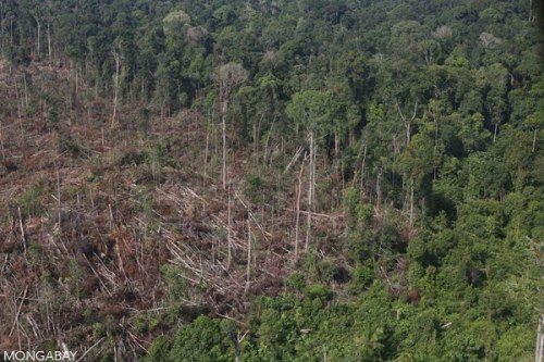 Destruction of protected elephant habitat in Indonesia's Tesso Nilo National Park for palm oil production in June 2015.