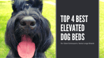 The Top 4 Best Elevated Dog Beds for Giant Schnauzers I Active Large Breed