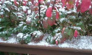 Changing of seasons changes our lives--fist snow at Gail Kittleson's