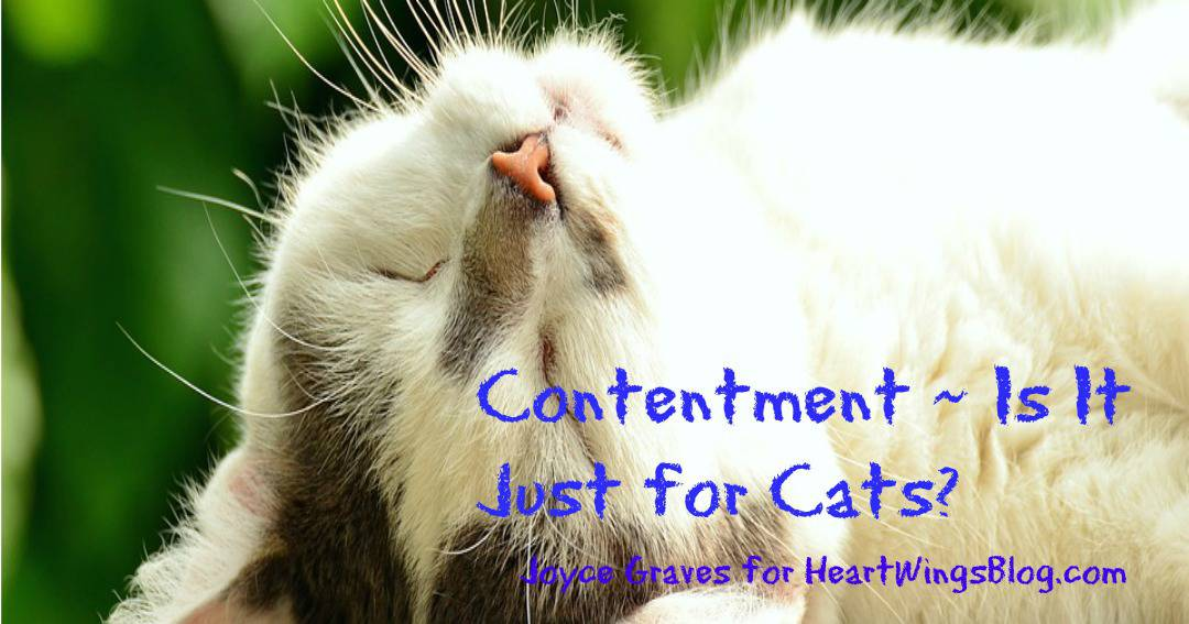 Contentment ~ Is It Just For Cats?
