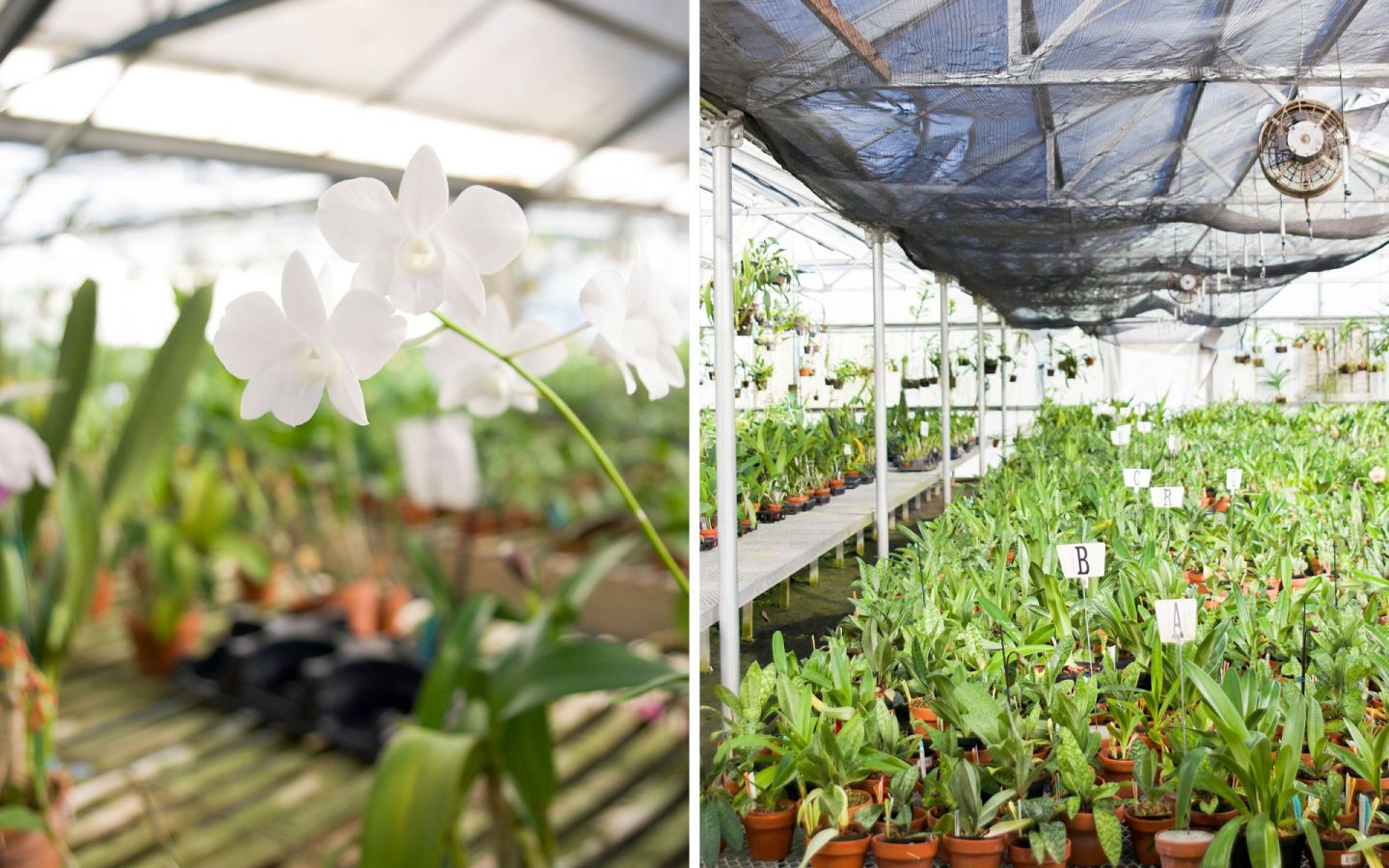 rural virginia day trip - chadwick and sons orchids - visit powhatan