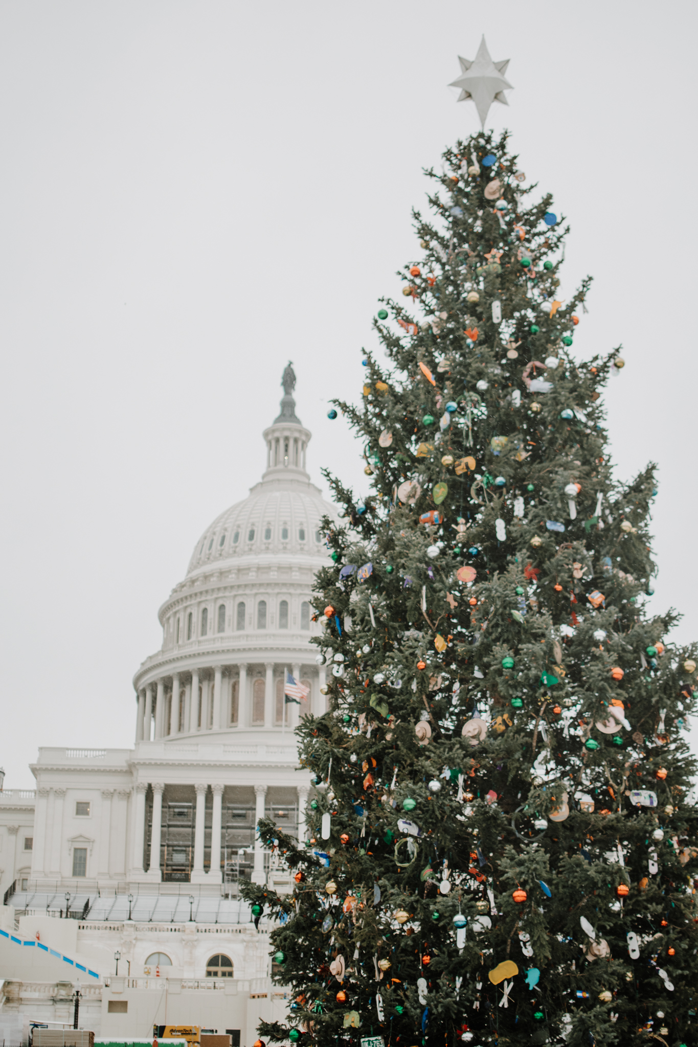 snow day in washington dc - us capitol christmas tree - us capitol in the snow