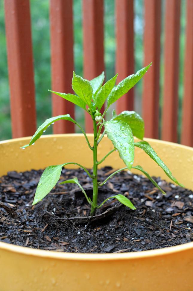 How I've Fallen in Love with Gardening + Progress