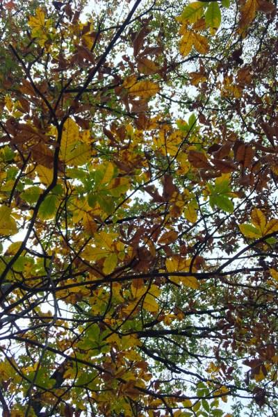 lovely links! #fall #worldseries