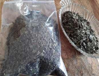 Gingko Biloba leaf 3