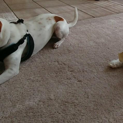 Lily &Tucker having fun