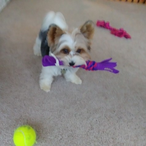 Tucker playing with toys