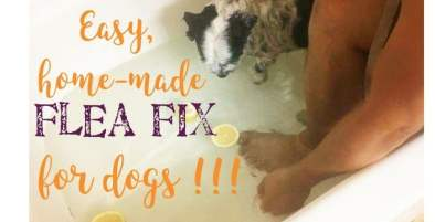 flea fix for dogs